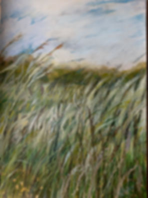 July grasses.jpg