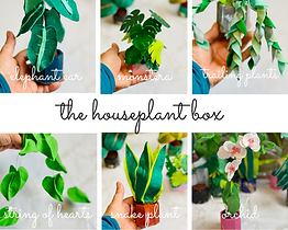 houseplant box.png
