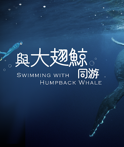 swimming with humpback whale 1920 KV.png
