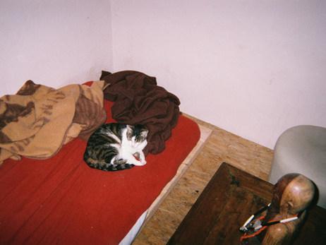 Auf diesem Foto streichle ich meine Katze Kleo. Sie war für mich ein wichtiger Grund nach Lübnitz zu ziehen und ist meine beste Freundin. Sie wartet jeden Tag auf mich, wenn ich nach Hause komme.