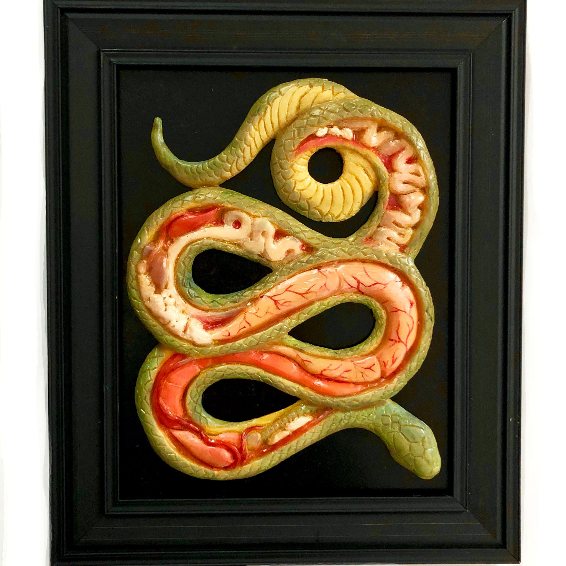 Snake Anatomy, 14x11 inches