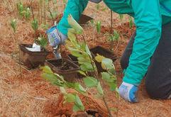 Plantation d'arbres - parc des Sillons