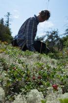 Tapis végétal propriétée protégée sillons Havre-aux-Basques 2012 (2)