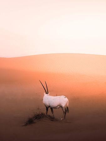 Foto:Pat Whelen/Pexels.Coleção África - Copyright © Nó de Algodoeiro - Todos os direitos reservados.
