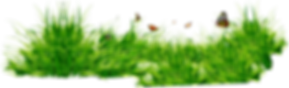 grass_PNG4919.png