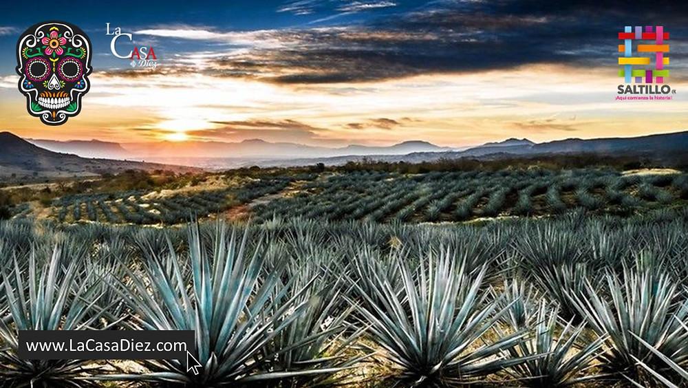 Agave Spirits, una usurpación a destilados mexicanos