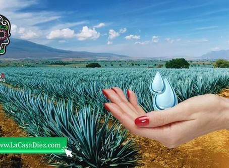 EL CORONAVIRUS EN MÉXICO es combatido con Gel Antibacterial base Mezcal.