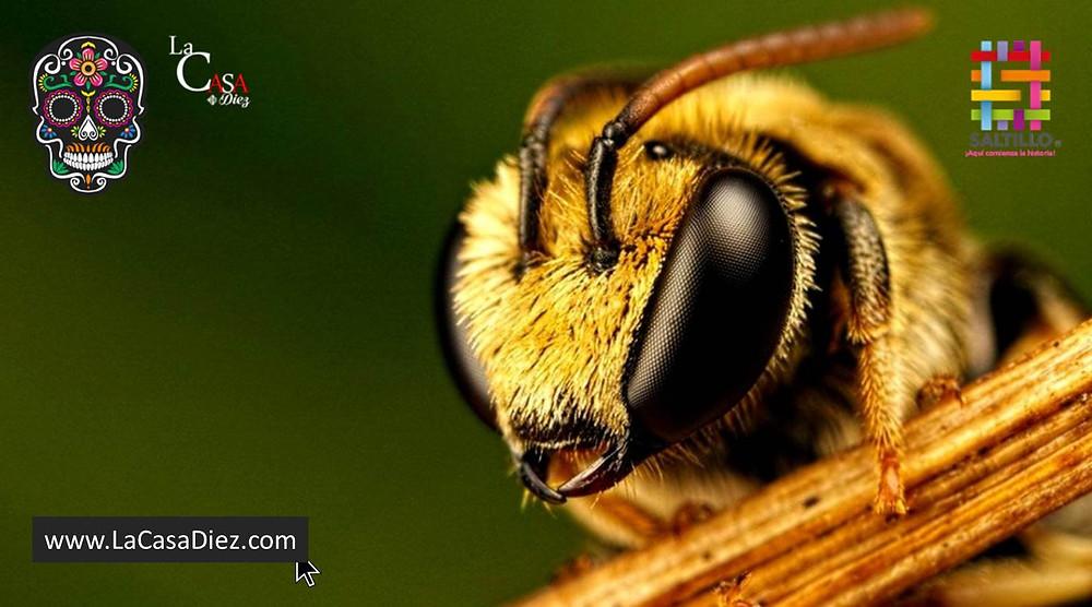 La importancia de la polinización de las abejas