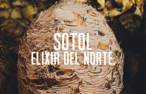 Sotol Elixir del Norte