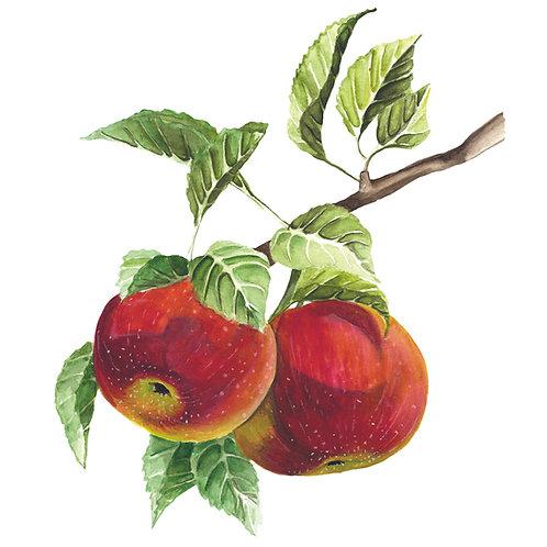 Aszalt szatmári alma - natúr 1000g