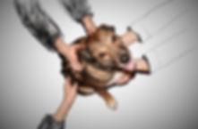 29124-0.heart-of-a-dog-original-2862.jpg