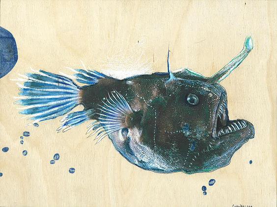 Anglerfish Study 1