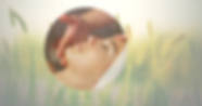 Soins Bio site-2.png