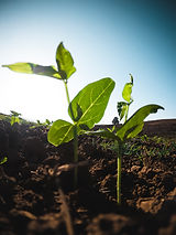 agriculture-cultivation-green-2218364.jp