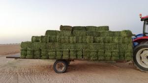 High-quality Harvest