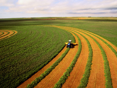 5 Tips to Maximize Alfalfa Leaf Retention