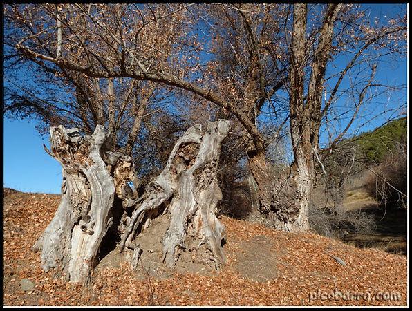 2013-16_Alamos_Centenarios-120.jpg