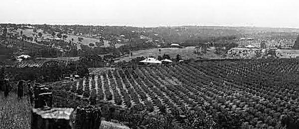 August - Crops.jpg