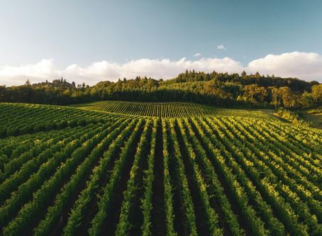 Week-end dégustations et découvertes en Champagne-Ardenne