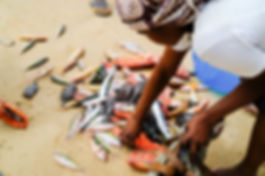 pêche-artisanale-mozambique.jpg