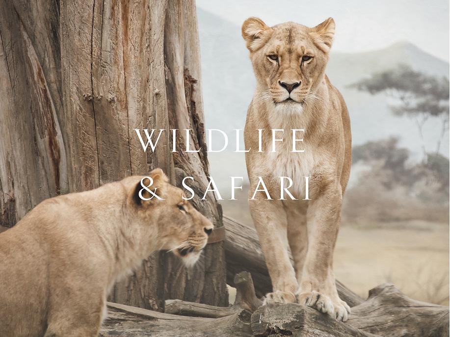 Wildlife and safaris.png
