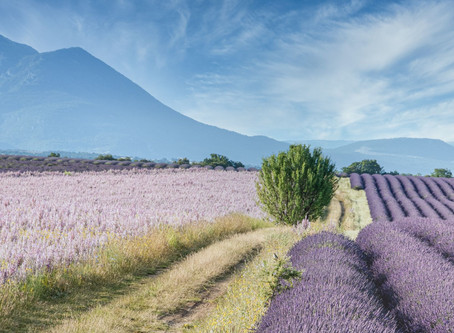 Provence : Les 5 plus beaux sites naturels à visiter absolument cet été