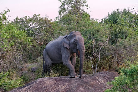 safari-sri-lanka.jpg