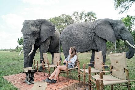 elephants-abu-camp-botswana.jpg