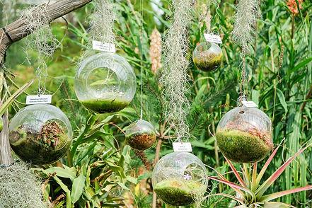 jardin-botanique-singapour.jpg