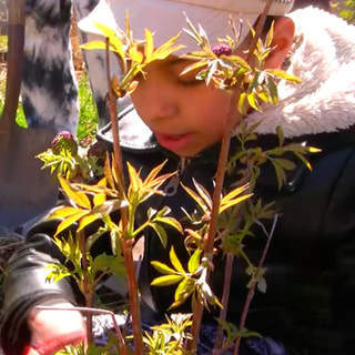 Orchard Planting Vid