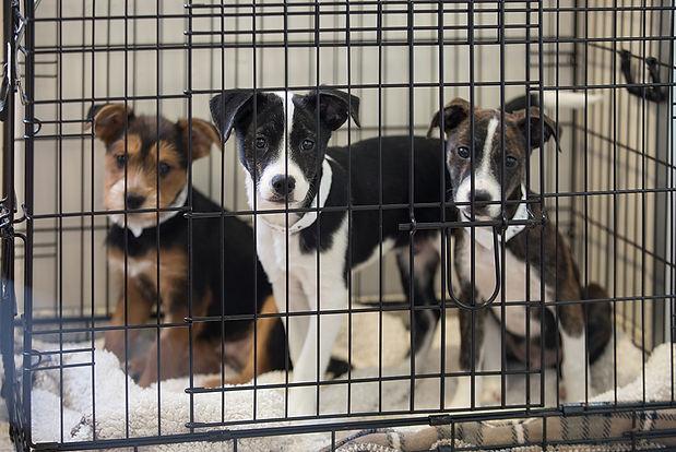 pet shelter 2.jpg