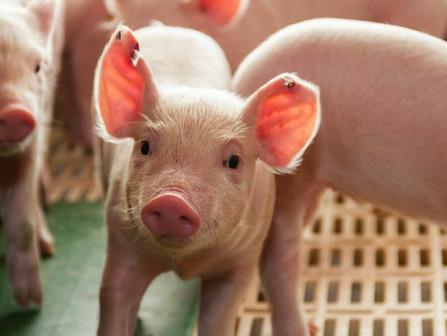 Matma Corp recognized as leader in swine flu testing
