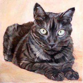 Cat Portrait San Francisco