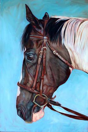 Horse Portrait Miami