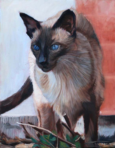 Chi Chi the persian cat
