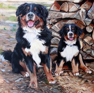 Zues and Zander Bermese Mountain Dogs
