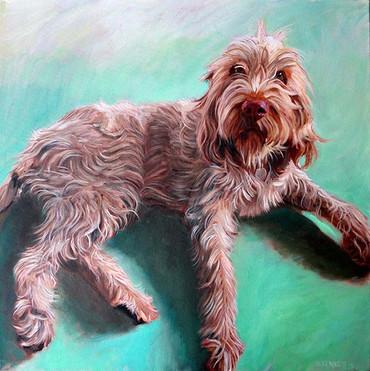 Houston Dog Portrait