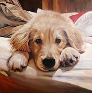 Tristan the Golden Retriever puppy