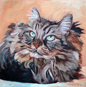 Cat Portrait Miami