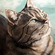 Custom Cat Portrait | Denver