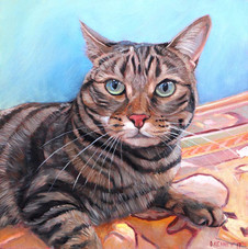 Emmy the Tabby Cat