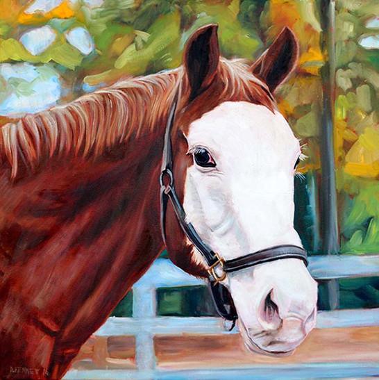 Horse Portrait San Francisco