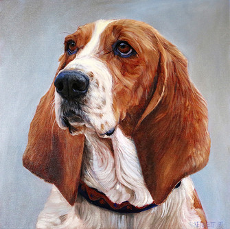 Lilly the Basset Hound