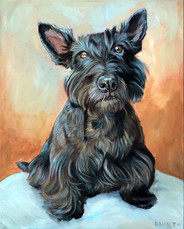 Dog Portrait Seattle