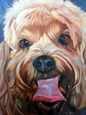 Dog Portrait Miami