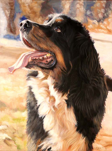 Rigley the Bernese Mountain Dog