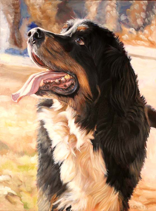 Rigley the Bernese Mountain Dog