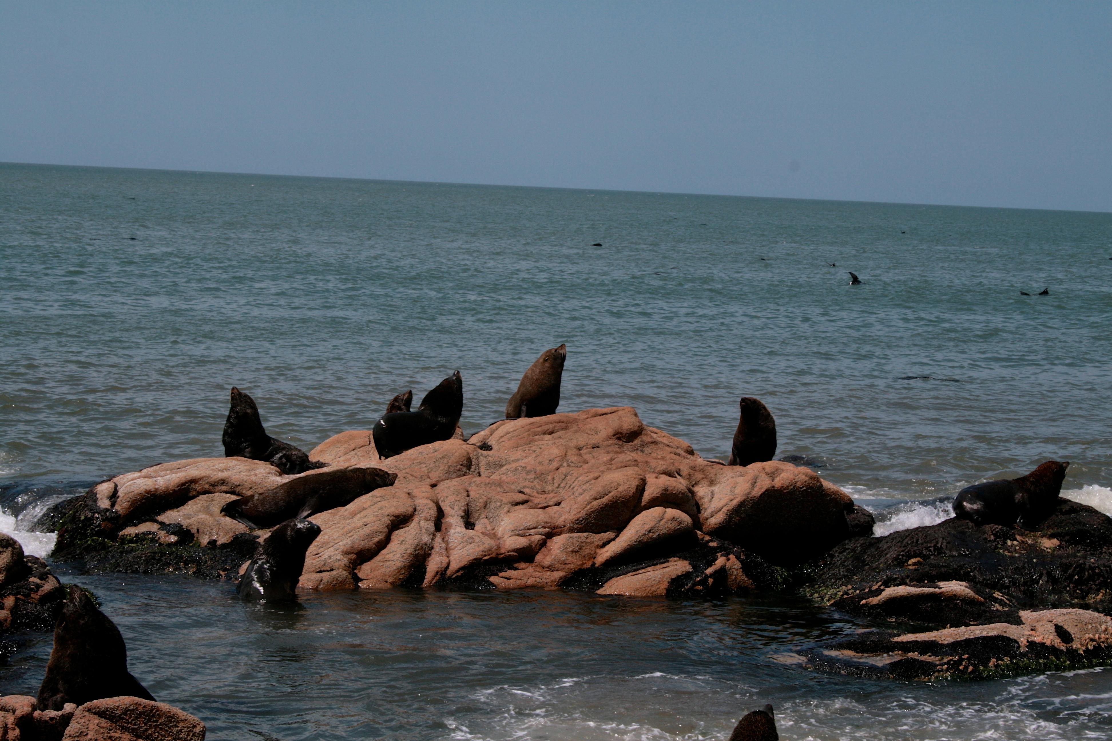 Loups de mer ©daniel di lione