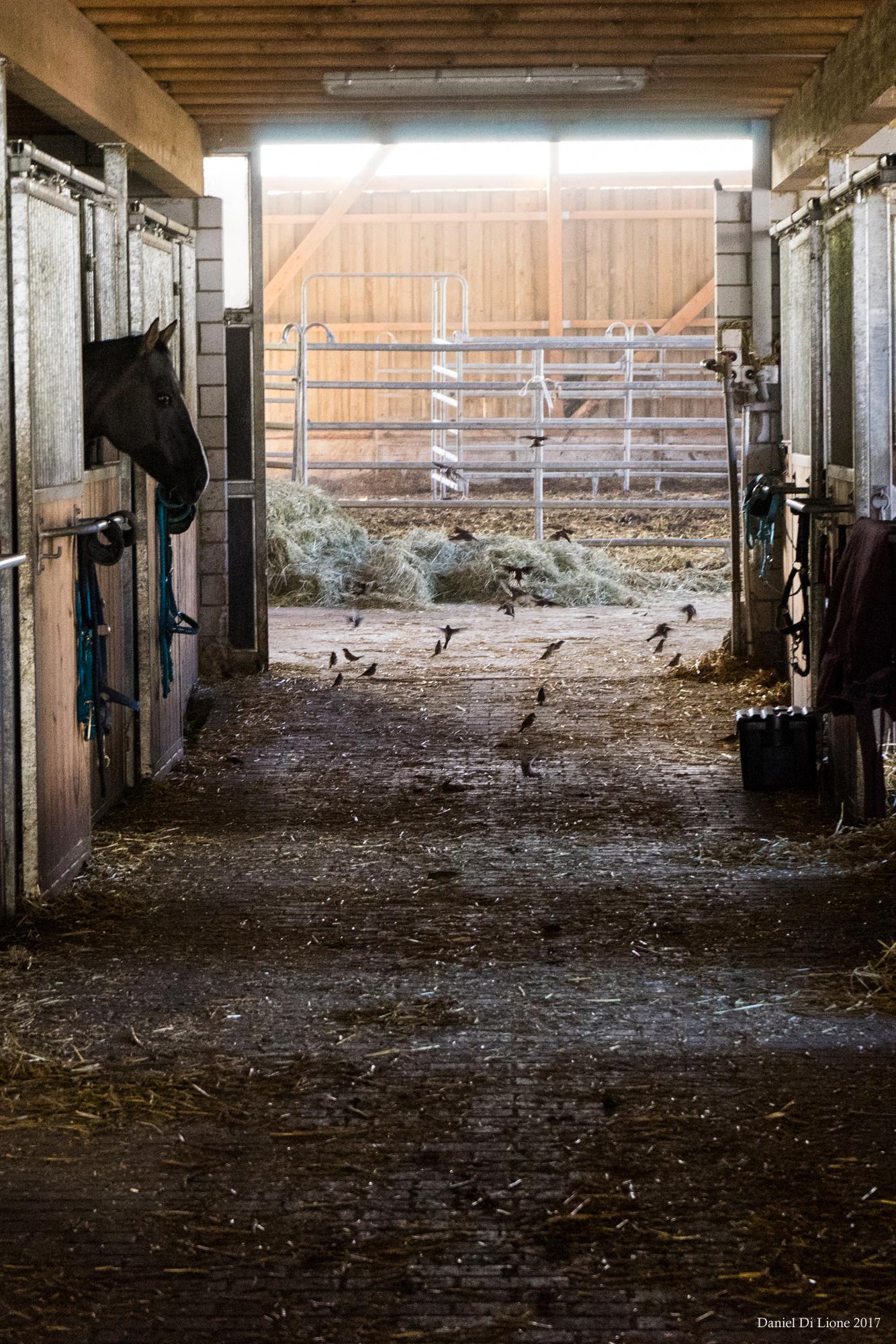 Rencontres à la ferme