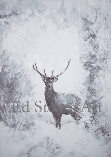 Young Stag in Winter